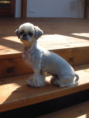 """Baby"" in summer´s coatcut"