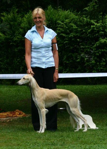 Specialty sighthound show - 22.8.2009 - Konopiště