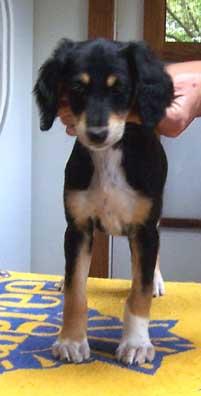 Sophia 8 weeks