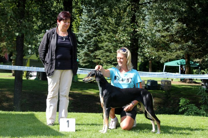 Tazi Bint Sofe Et Aurum Exc.1, CAC, Centraleuropean Winner 2011, BOS