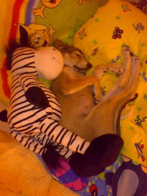 Isis and her lovely zebra